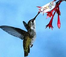 Ya es una realidad el nuevo algoritmo colibrí o hummingbird