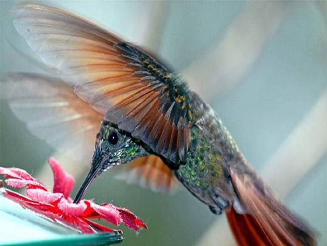 Nuevo algoritmo colibrí de Google
