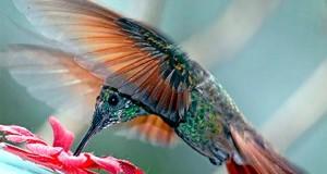 Cómo escribir para el nuevo algoritmo colibrí de Google
